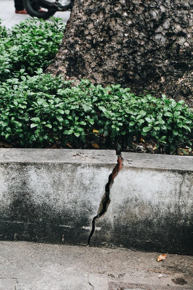 Sau vụ cây xanh bật gốc đè chết người: Vẫn còn nhiều cây đã già cỗi có rễ lộ thiên, nhánh vươn ra mặt đường ở Sài Gòn - ảnh 14