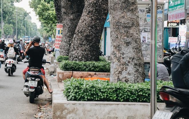 Sau vụ cây xanh bật gốc đè chết người: Vẫn còn nhiều cây đã già cỗi có rễ lộ thiên, nhánh vươn ra mặt đường ở Sài Gòn - ảnh 13