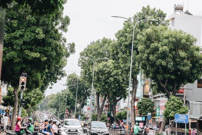 Sau vụ cây xanh bật gốc đè chết người: Vẫn còn nhiều cây đã già cỗi có rễ lộ thiên, nhánh vươn ra mặt đường ở Sài Gòn - ảnh 17