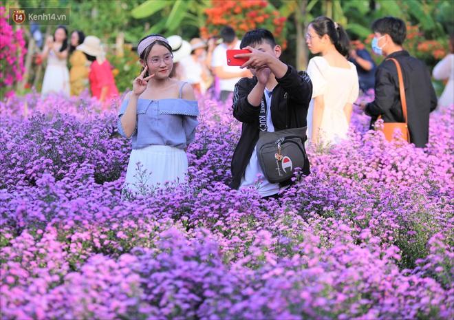 Dân tình chen chúc sống ảo tại vườn hoa thạch thảo đẹp lịm tim lần đầu được trồng ở Đà Nẵng - ảnh 4