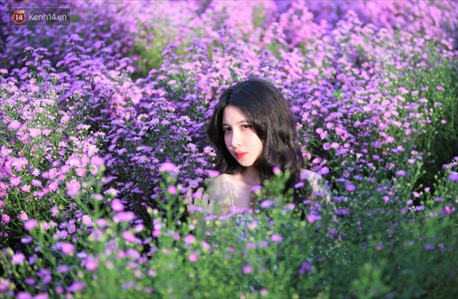 Dân tình chen chúc sống ảo tại vườn hoa thạch thảo đẹp lịm tim lần đầu được trồng ở Đà Nẵng - ảnh 1