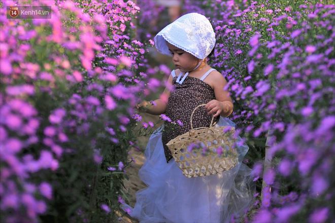 Dân tình chen chúc sống ảo tại vườn hoa thạch thảo đẹp lịm tim lần đầu được trồng ở Đà Nẵng - ảnh 7