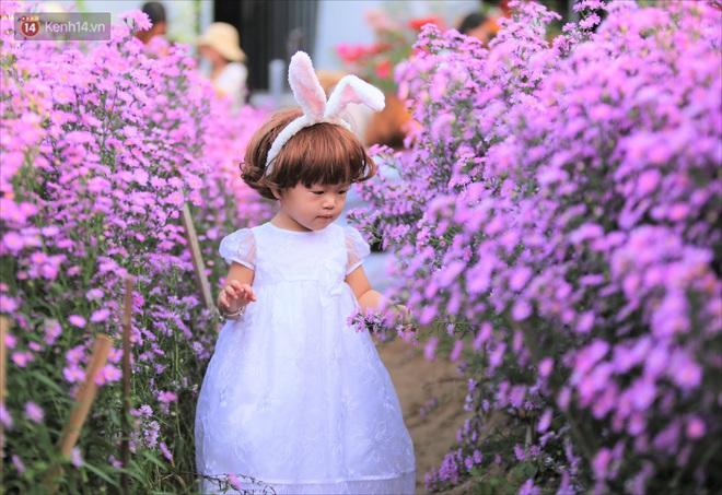 Dân tình chen chúc sống ảo tại vườn hoa thạch thảo đẹp lịm tim lần đầu được trồng ở Đà Nẵng - ảnh 9