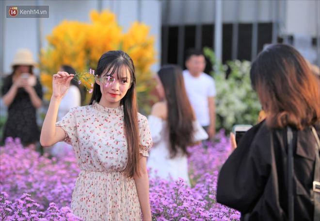 Dân tình chen chúc sống ảo tại vườn hoa thạch thảo đẹp lịm tim lần đầu được trồng ở Đà Nẵng - ảnh 16