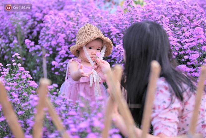 Dân tình chen chúc sống ảo tại vườn hoa thạch thảo đẹp lịm tim lần đầu được trồng ở Đà Nẵng - ảnh 10