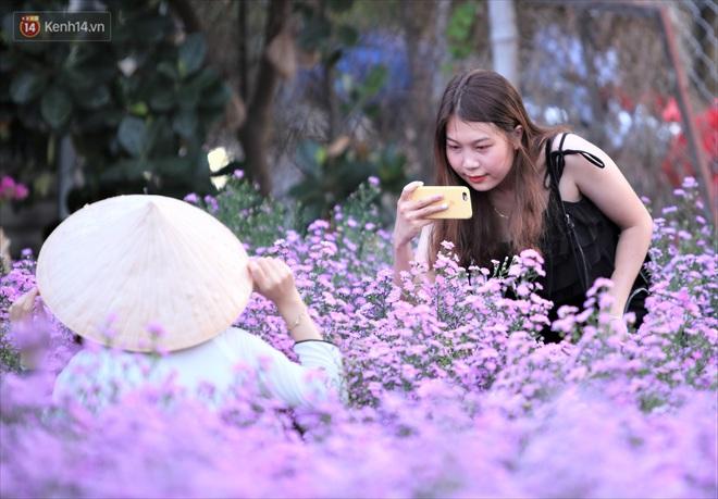 Dân tình chen chúc sống ảo tại vườn hoa thạch thảo đẹp lịm tim lần đầu được trồng ở Đà Nẵng - ảnh 6