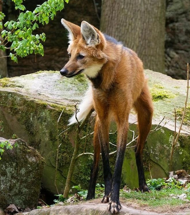 Những loài động vật có ngoại hình sai trái, tác phẩm của mẹ thiên nhiên khi đang khó ở - ảnh 10