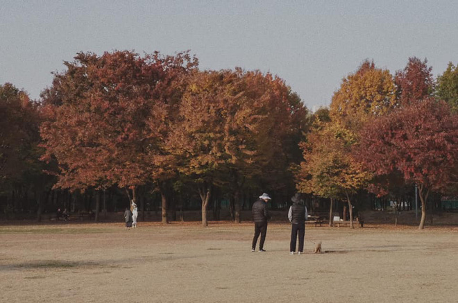Bộ ảnh xem xong trào dâng thương nhớ Seoul: Đã đến mùa nơi này đẹp nhất, nhưng năm nay ta không thể gặp nhau - Ảnh 5.