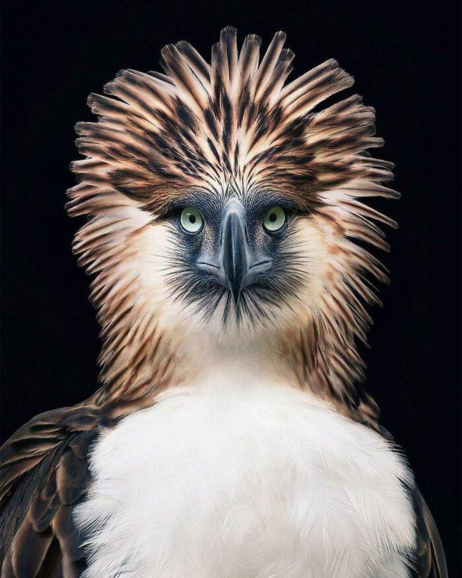 Đầu cắt moi đến râu quai nón - chùm ảnh chân dung cực nghệ của một số loài chim siêu hiếm có khó tìm - ảnh 14