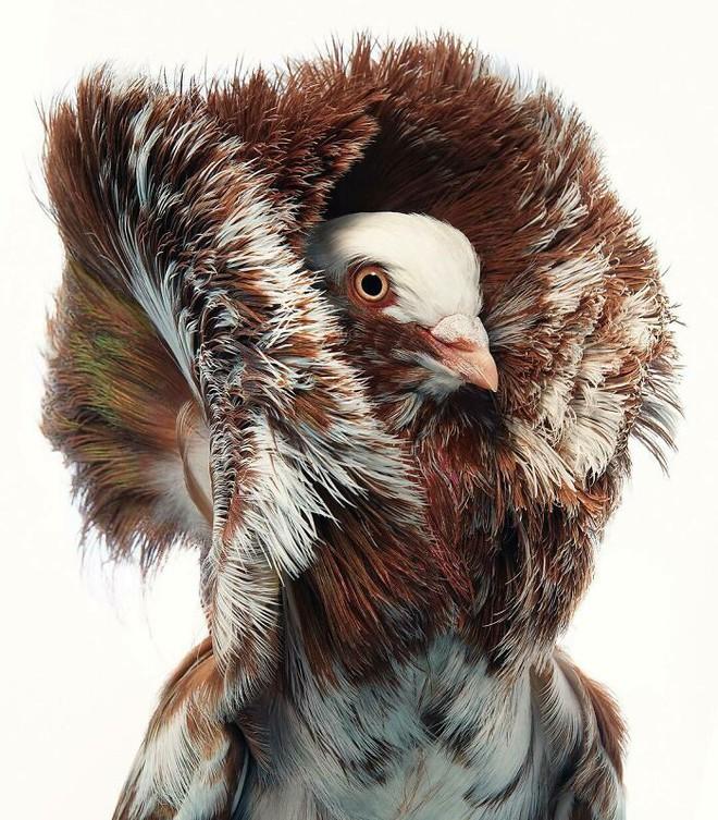 Đầu cắt moi đến râu quai nón - chùm ảnh chân dung cực nghệ của một số loài chim siêu hiếm có khó tìm - ảnh 6