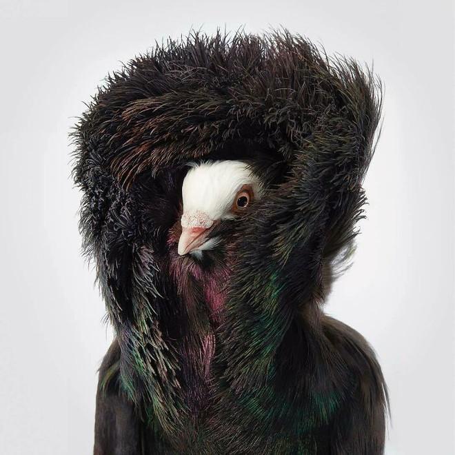 Đầu cắt moi đến râu quai nón - chùm ảnh chân dung cực nghệ của một số loài chim siêu hiếm có khó tìm - ảnh 13