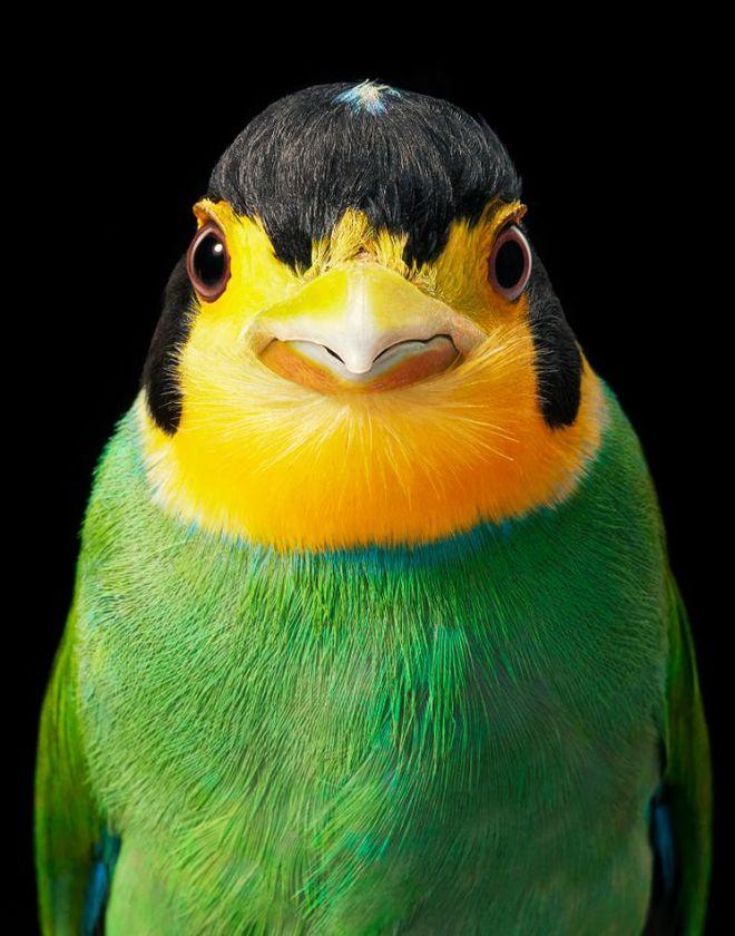 Đầu cắt moi đến râu quai nón - chùm ảnh chân dung cực nghệ của một số loài chim siêu hiếm có khó tìm - ảnh 12
