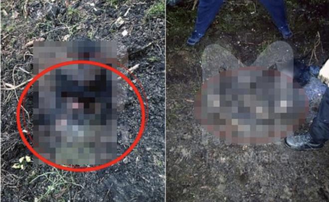 Đi bộ trong rừng, người đàn ông kinh hồn bạt vía khi vấp phải đầu người và một loạt chi tiết rùng rợn khiến cảnh sát đau đầu tìm lời giải - Ảnh 1.