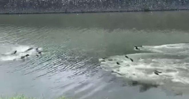 Hai gia tộc rái cá đánh nhau như cơm bữa suốt 5 năm ròng để tranh giành từng miếng tôm manh cá - ảnh 2