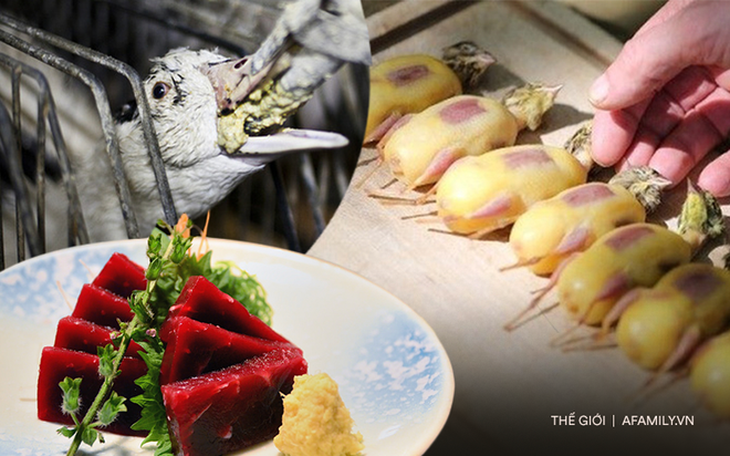 Súp vi cá mập, gan ngỗng, sushi cá ngừ xanh, liệu con người có thấu nỗi đau ai oán mà loài vật phải chịu đựng để cho ra ẩm thực tinh hoa? - ảnh 1