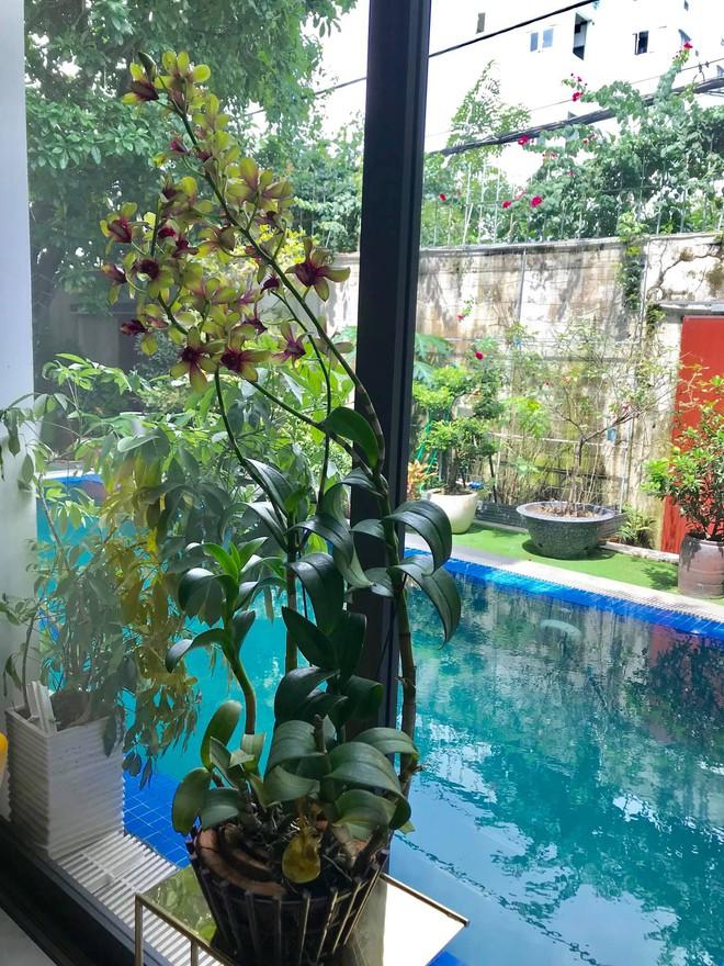 Khu vực sân vườn bên trong nhà của