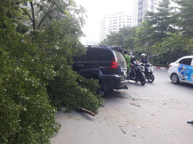 Hà Nội: Xe sang Lexus gây tai nạn liên hoàn, chỉ chịu dừng lại khi húc đổ gốc cây bên đường - ảnh 2