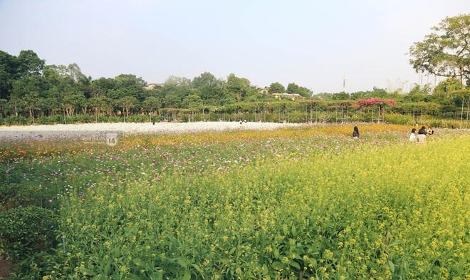 Trường ĐH rộng gần 200 ha có vườn hoa đẹp nhất mùa đông Hà Nội, nhiều góc sống ảo cực chill chỉ với 25K - ảnh 8