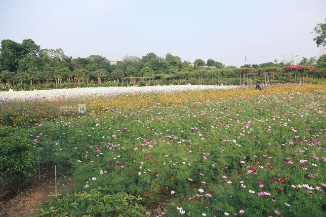 Trường ĐH rộng gần 200 ha có vườn hoa đẹp nhất mùa đông Hà Nội, nhiều góc sống ảo cực chill chỉ với 25K - ảnh 9
