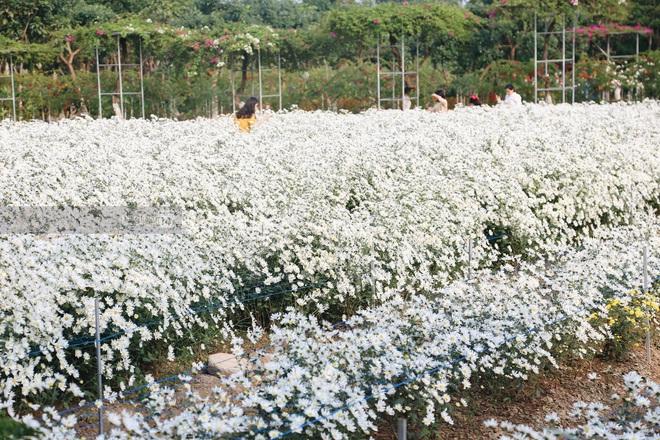 Trường ĐH rộng gần 200 ha có vườn hoa đẹp nhất mùa đông Hà Nội, nhiều góc sống ảo cực chill chỉ với 25K - ảnh 10