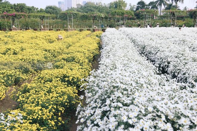 Trường ĐH rộng gần 200 ha có vườn hoa đẹp nhất mùa đông Hà Nội, nhiều góc sống ảo cực chill chỉ với 25K - ảnh 1
