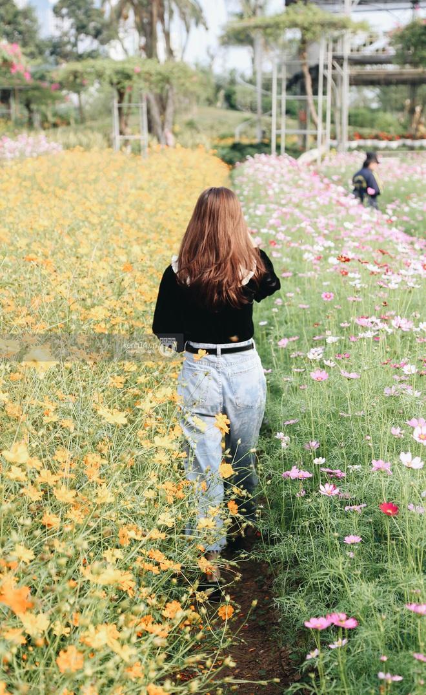 Trường ĐH rộng gần 200 ha có vườn hoa đẹp nhất mùa đông Hà Nội, nhiều góc sống ảo cực chill chỉ với 25K - ảnh 13