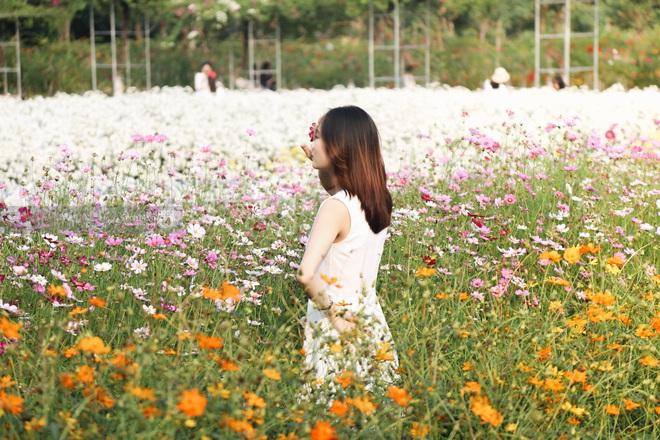 Trường ĐH rộng gần 200 ha có vườn hoa đẹp nhất mùa đông Hà Nội, nhiều góc sống ảo cực chill chỉ với 25K - ảnh 5