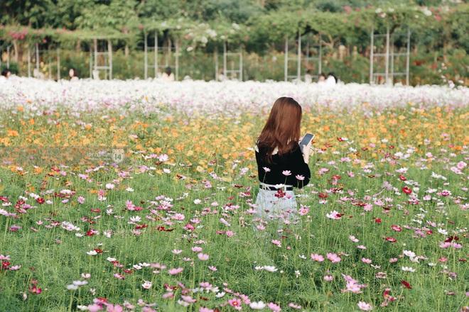 Trường ĐH rộng gần 200 ha có vườn hoa đẹp nhất mùa đông Hà Nội, nhiều góc sống ảo cực chill chỉ với 25K - ảnh 14