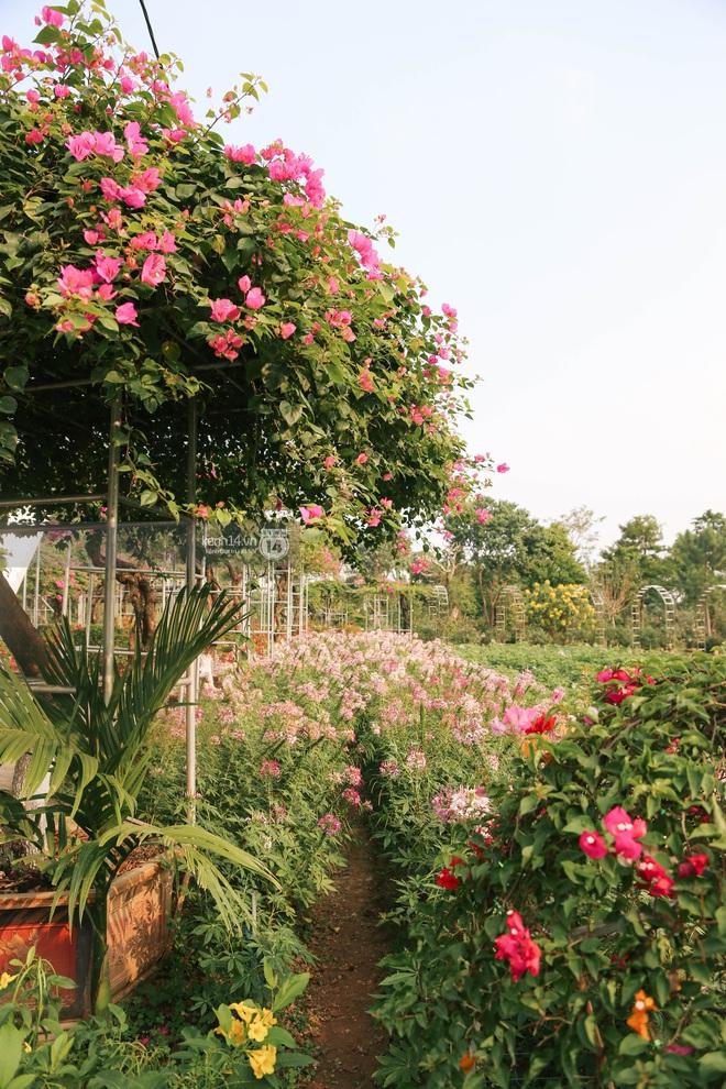 Trường ĐH rộng gần 200 ha có vườn hoa đẹp nhất mùa đông Hà Nội, nhiều góc sống ảo cực chill chỉ với 25K - ảnh 15
