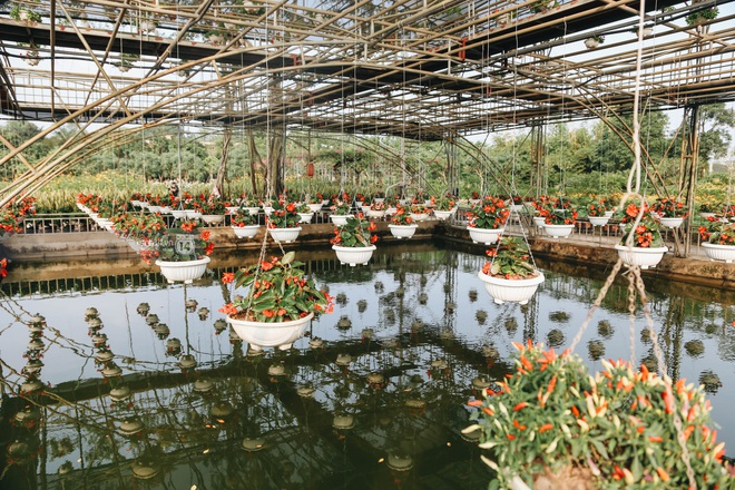 Trường ĐH rộng gần 200 ha có vườn hoa đẹp nhất mùa đông Hà Nội, nhiều góc sống ảo cực chill chỉ với 25K - ảnh 4
