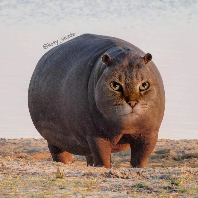 Loạt ảnh ghép mặt mèo vào body 500 anh em động vật khác, càng xem càng thấy sai trái - Ảnh 9.