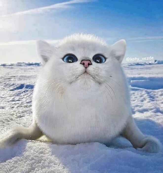 Loạt ảnh ghép mặt mèo vào body 500 anh em động vật khác, càng xem càng thấy sai trái - Ảnh 6.