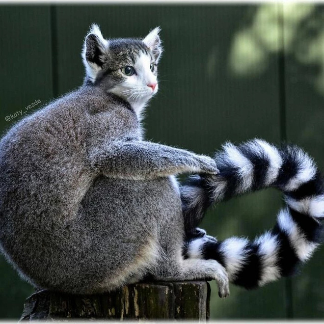 Loạt ảnh ghép mặt mèo vào body 500 anh em động vật khác, càng xem càng thấy sai trái - Ảnh 11.