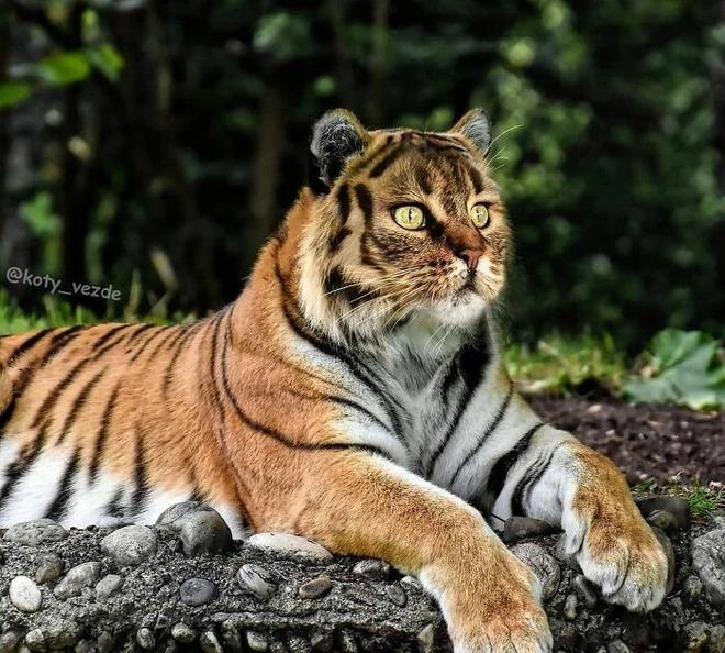 Loạt ảnh ghép mặt mèo vào body 500 anh em động vật khác, càng xem càng thấy sai trái - Ảnh 14.