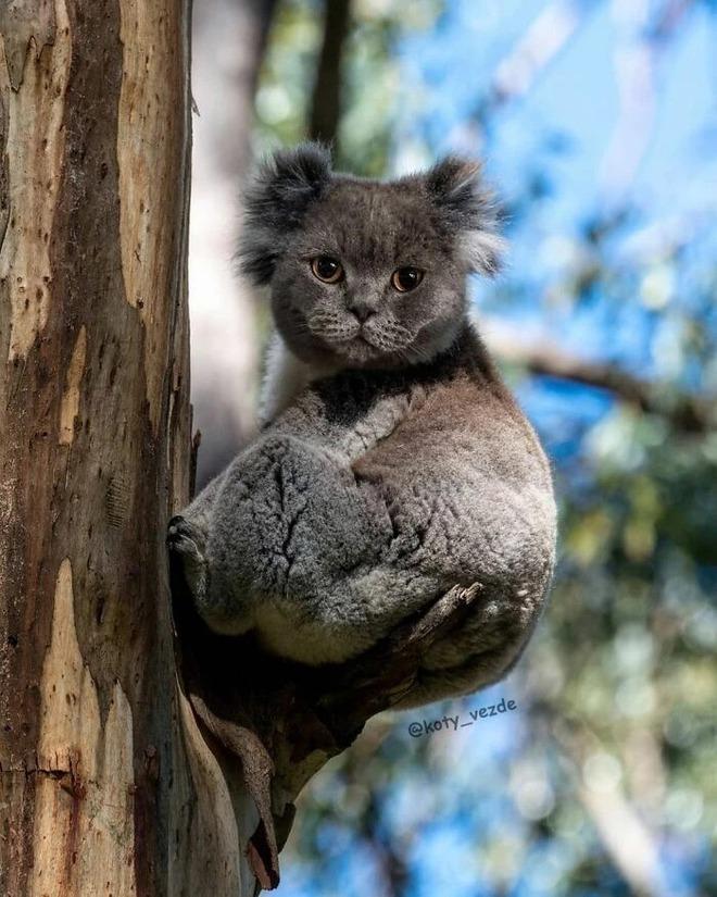 Loạt ảnh ghép mặt mèo vào body 500 anh em động vật khác, càng xem càng thấy sai trái - Ảnh 13.