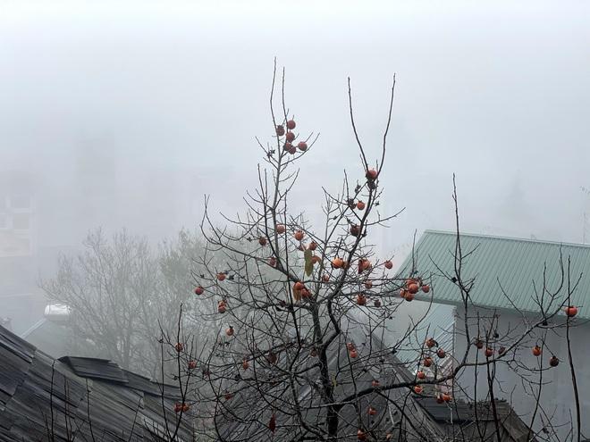 Ảnh, clip: Nhiệt độ giảm mạnh chỉ còn 8 độ C, thị trấn Sa Pa chìm trong sương mù, rét buốt - ảnh 5