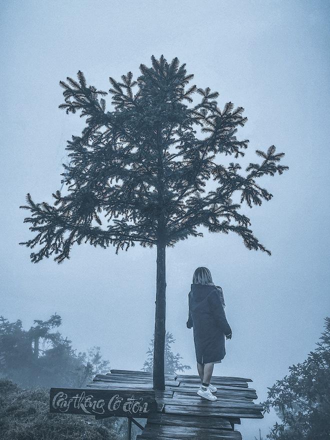 Ảnh, clip: Nhiệt độ giảm mạnh chỉ còn 8 độ C, thị trấn Sa Pa chìm trong sương mù, rét buốt - ảnh 4