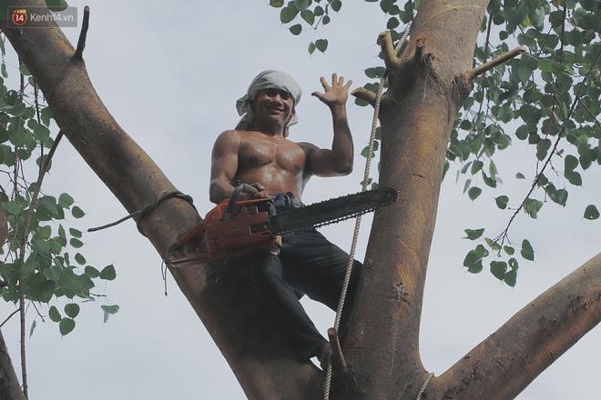 Gặp vua khỉ U50 ở miền Tây: 27 năm thích leo trèo, dù bị ong chích, kiến đốt đến phát sốt vẫn thấy bình thường - ảnh 1