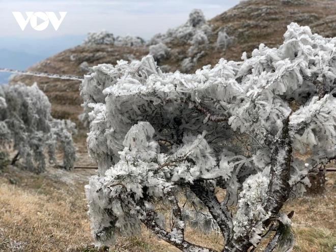 Livestream: Nhiệt độ xuống -5 độ C, tuyết phủ trắng Y Tý (Bát Xát) - Ảnh 4.