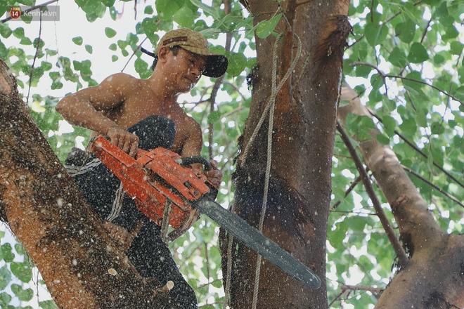 Gặp vua khỉ U50 ở miền Tây: 27 năm thích leo trèo, dù bị ong chích, kiến đốt đến phát sốt vẫn thấy bình thường - ảnh 14