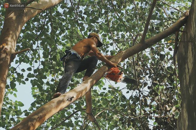 Gặp vua khỉ U50 ở miền Tây: 27 năm thích leo trèo, dù bị ong chích, kiến đốt đến phát sốt vẫn thấy bình thường - ảnh 10