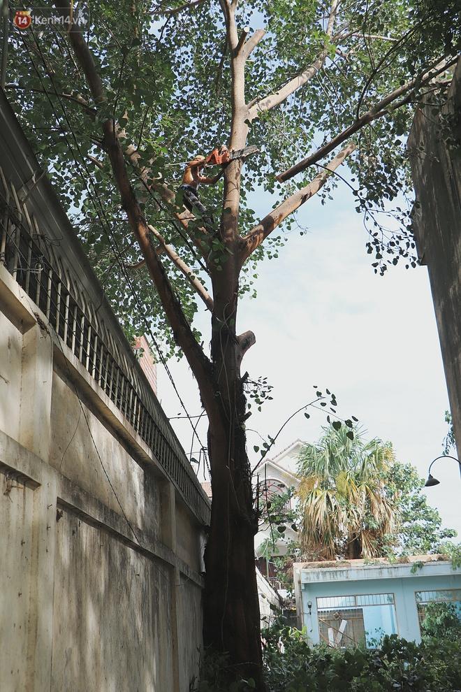 Gặp vua khỉ U50 ở miền Tây: 27 năm thích leo trèo, dù bị ong chích, kiến đốt đến phát sốt vẫn thấy bình thường - ảnh 8