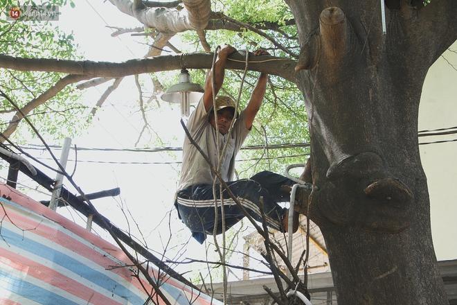 Gặp vua khỉ U50 ở miền Tây: 27 năm thích leo trèo, dù bị ong chích, kiến đốt đến phát sốt vẫn thấy bình thường - ảnh 5