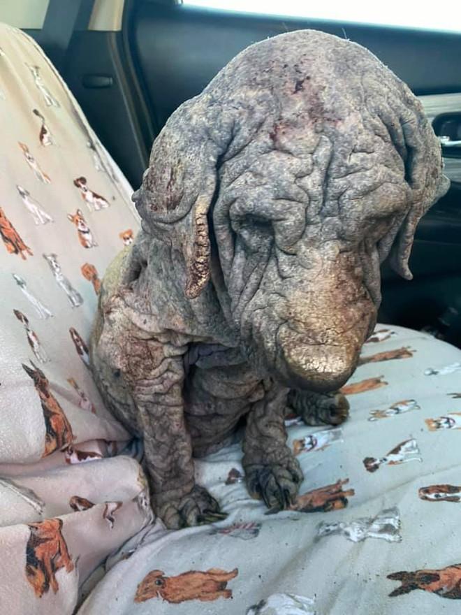 Chú chó nhìn như đã hoá đá, không ai nghĩ vẫn còn sống khiến nhiều người bật khóc vì xót xa, tìm hiểu càng thấy đáng thương vô cùng - ảnh 3