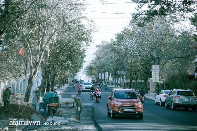 Đẹp đến khó tin: Hàng trăm cây hoa ban nở trắng trời khắp Đà Lạt, cảnh tượng từ xa nhìn như tuyết phủ bao quanh thành phố! - Ảnh 7.