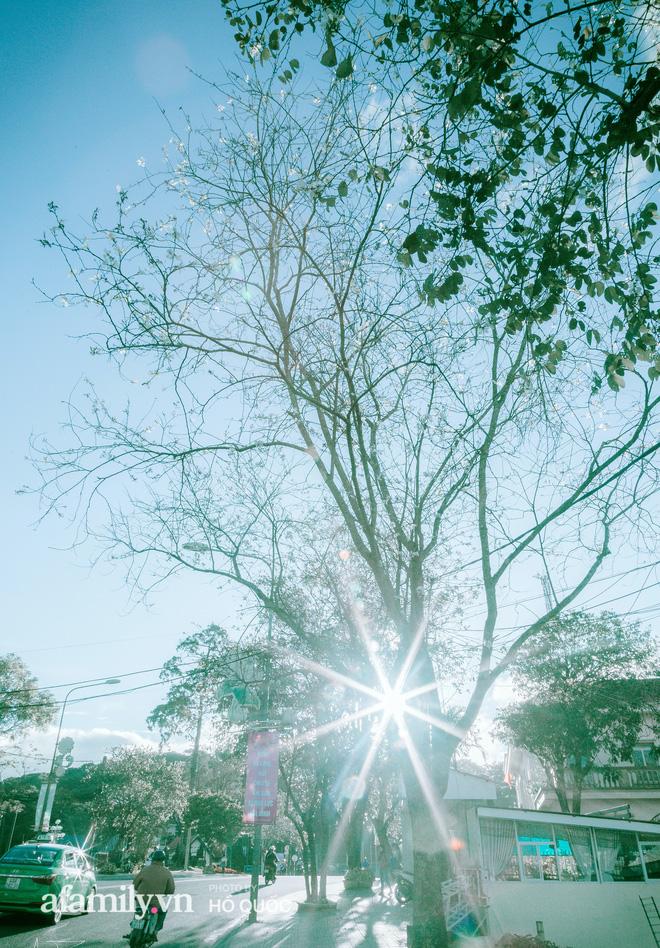 Đẹp đến khó tin: Hàng trăm cây hoa ban nở trắng trời khắp Đà Lạt, cảnh tượng từ xa nhìn như tuyết phủ bao quanh thành phố! - Ảnh 10.