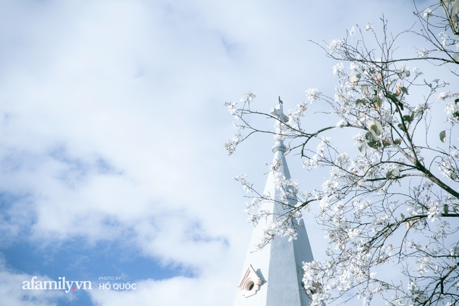 Đẹp đến khó tin: Hàng trăm cây hoa ban nở trắng trời khắp Đà Lạt, cảnh tượng từ xa nhìn như tuyết phủ bao quanh thành phố! - Ảnh 6.