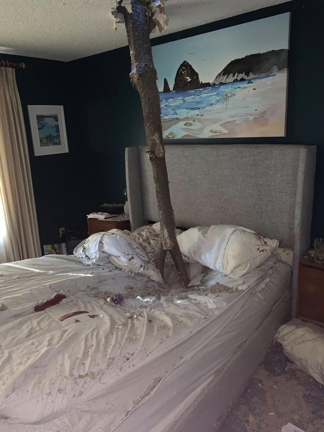Đang ngủ ngon lành, cặp vợ chồng bị cây đổ đâm lõm cả giường, xem lại ảnh hiện trường mới thấy bản thân cận kề cái chết thế nào - ảnh 1