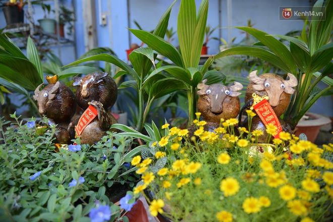 Độc đáo dừa bonsai hình con trâu khiến người Sài Gòn bỏ hàng triệu đồng mua chơi Tết Tân Sửu 2021 - ảnh 10