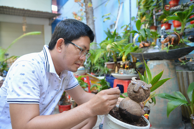Độc đáo dừa bonsai hình con trâu khiến người Sài Gòn bỏ hàng triệu đồng mua chơi Tết Tân Sửu 2021 - ảnh 2